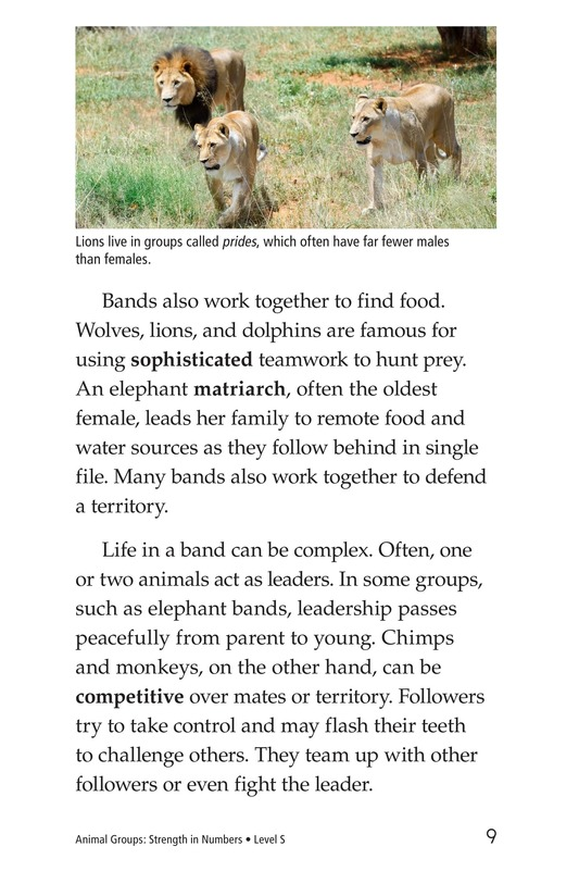 Book Preview For Animal Groups: Strength in Numbers Page 9