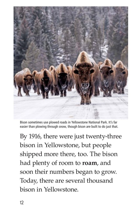 Book Preview For Bison Came Back Page 12