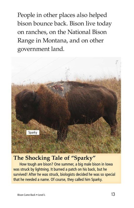 Book Preview For Bison Came Back Page 13