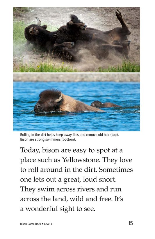 Book Preview For Bison Came Back Page 15