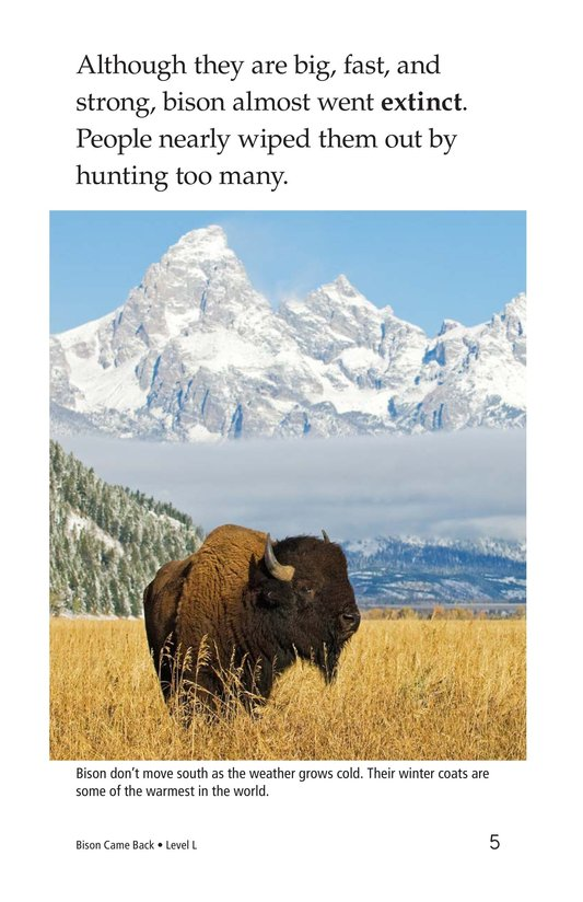 Book Preview For Bison Came Back Page 5