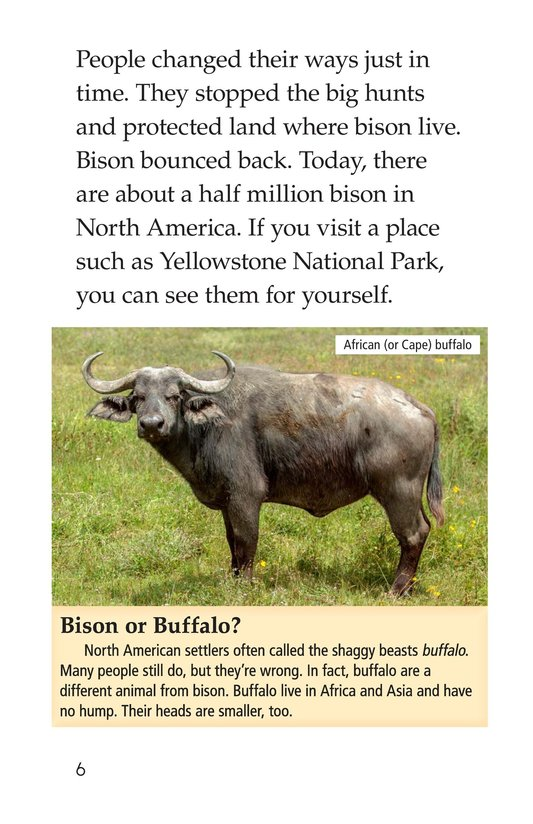 Book Preview For Bison Came Back Page 6