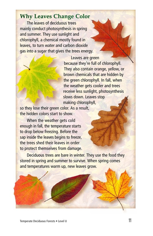 Book Preview For Temperate Deciduous Forests Page 11