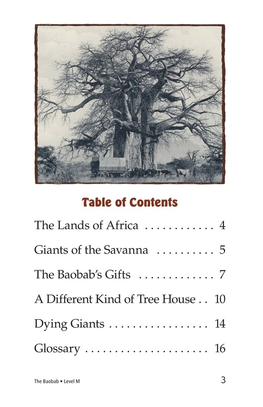 Book Preview For The Baobab Page 3