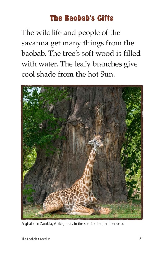 Book Preview For The Baobab Page 7
