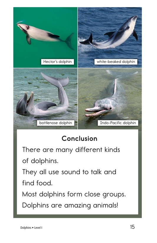 Book Preview For Dolphins Page 15