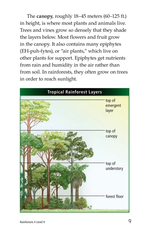Book Preview For Rainforests Page 9