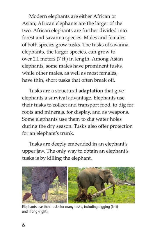 Book Preview For Ivory or Elephants Page 6