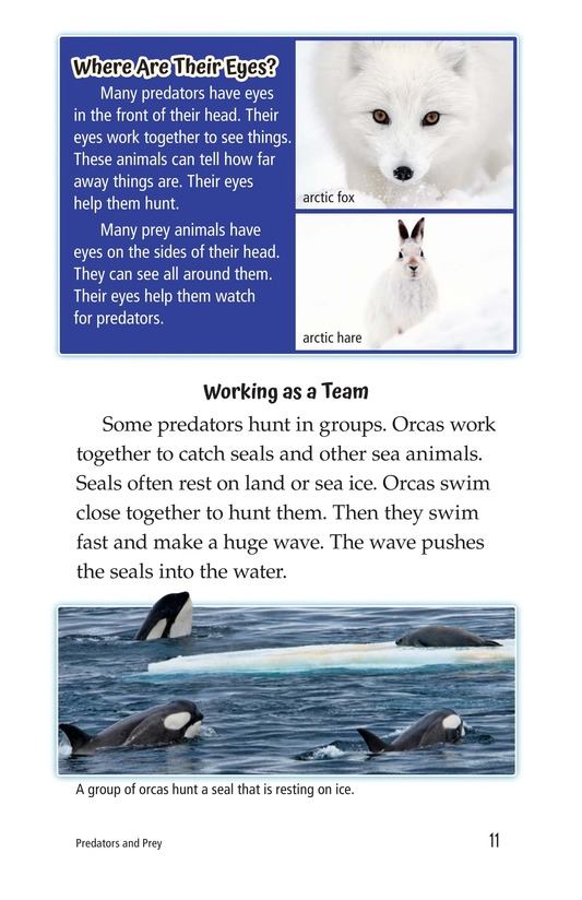 Book Preview For Predators and Prey Page 11