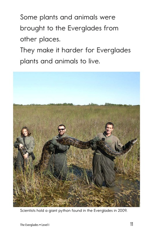 Book Preview For The Everglades Page 11