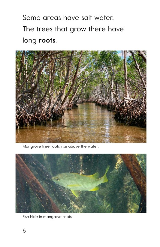 Book Preview For The Everglades Page 6