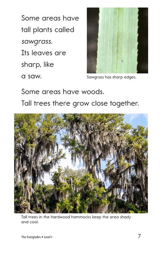 Book Preview For The Everglades Page 7