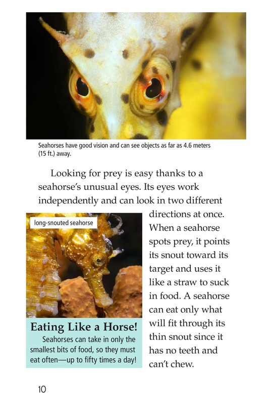 Book Preview For Seahorses Page 10