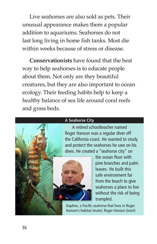 Book Preview For Seahorses Page 14