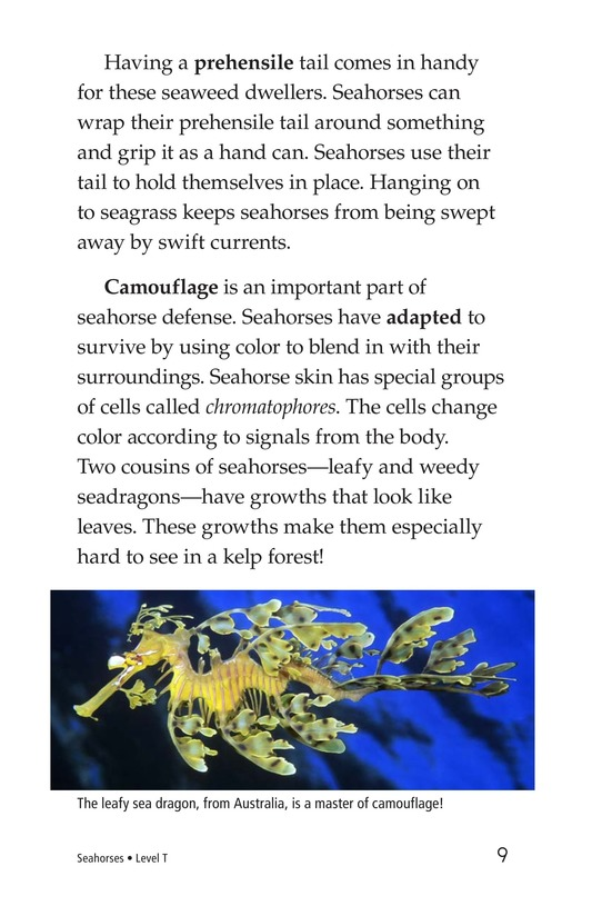 Book Preview For Seahorses Page 9