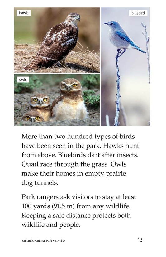 Book Preview For Badlands National Park Page 13