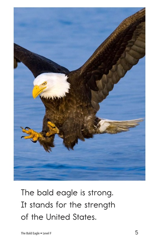 Book Preview For The Bald Eagle Page 5