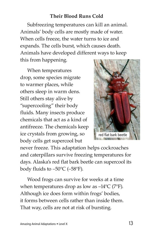 Book Preview For Amazing Animal Adaptations Page 13