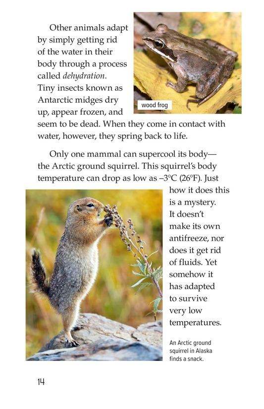 Book Preview For Amazing Animal Adaptations Page 14