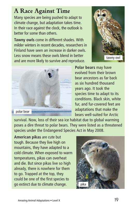 Book Preview For Amazing Animal Adaptations Page 19