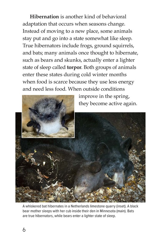 Book Preview For Amazing Animal Adaptations Page 6