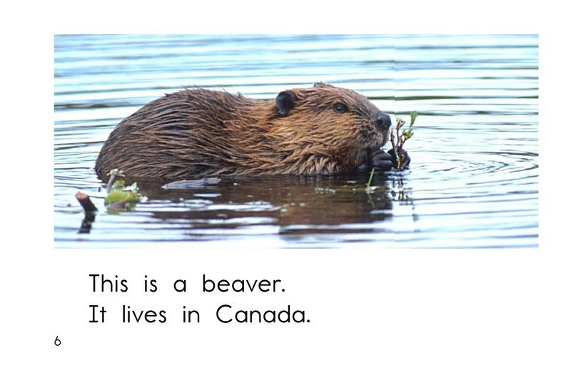 Book Preview For The Animals of Canada Page 6