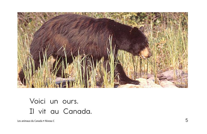 Book Preview For The Animals of Canada Page 5
