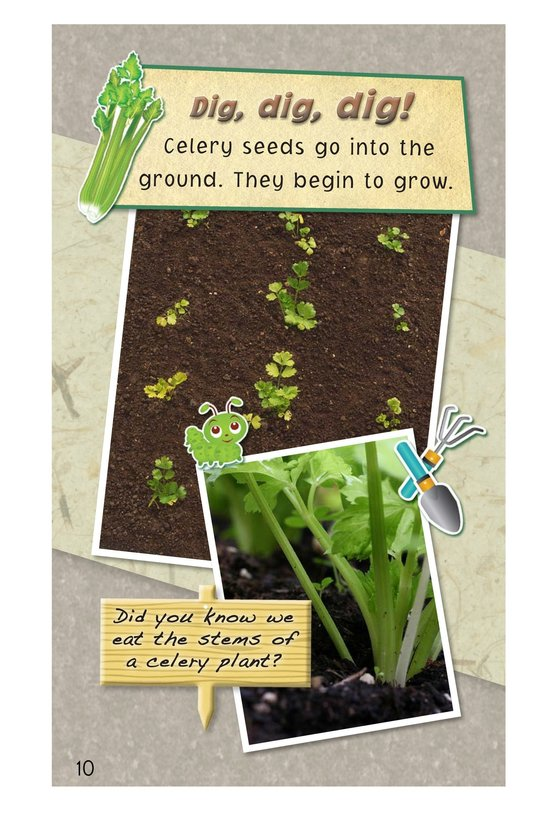 Book Preview For A Backyard Garden - Read 3 Page 10