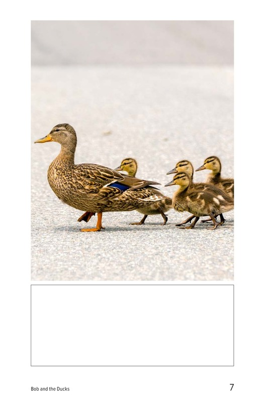 Book Preview For Bob and the Ducks Page 7