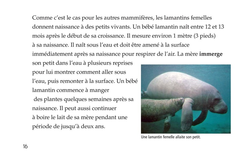 Book Preview For Manatees Page 16