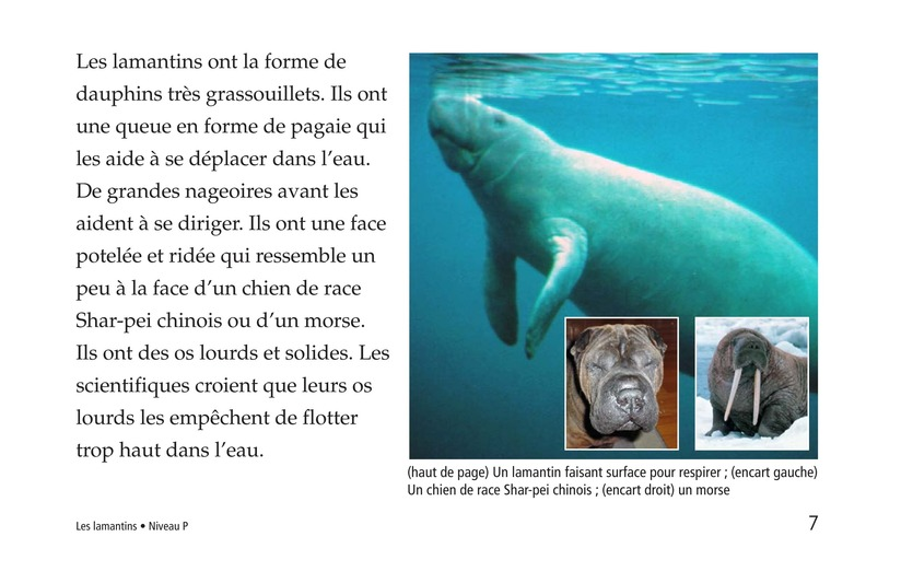 Book Preview For Manatees Page 7