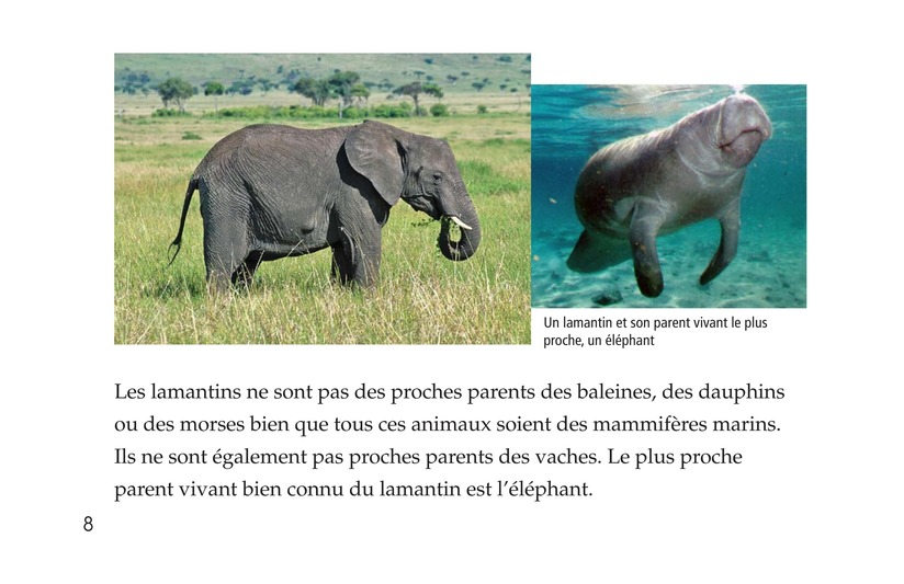 Book Preview For Manatees Page 8