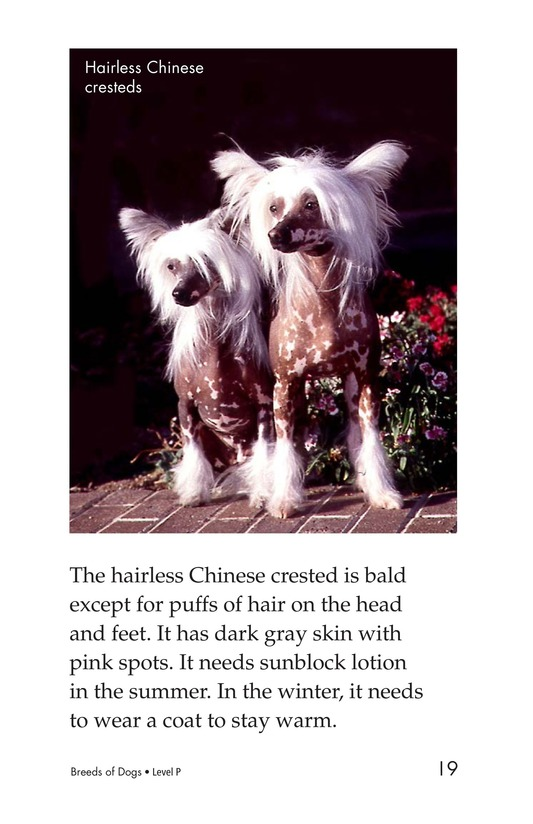 Book Preview For Breeds of Dogs Page 19