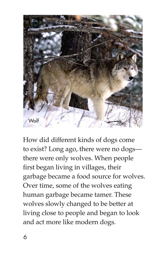 Book Preview For Breeds of Dogs Page 6
