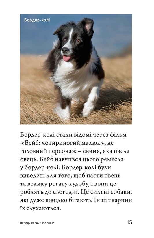 Book Preview For Breeds of Dogs Page 15