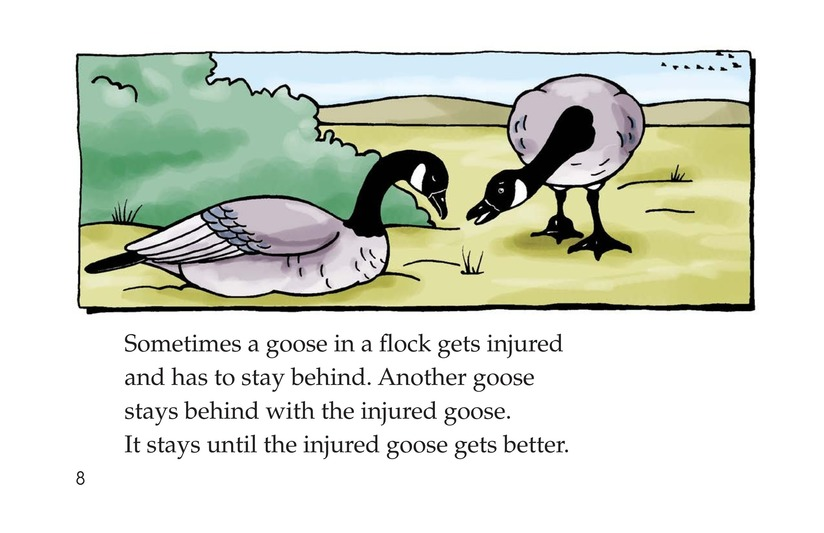 Book Preview For Migrating Geese Page 8