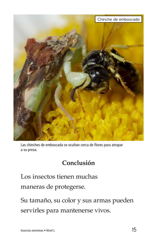 Book Preview For Extreme Insects Page 15