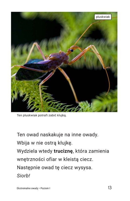 Book Preview For Extreme Insects Page 13