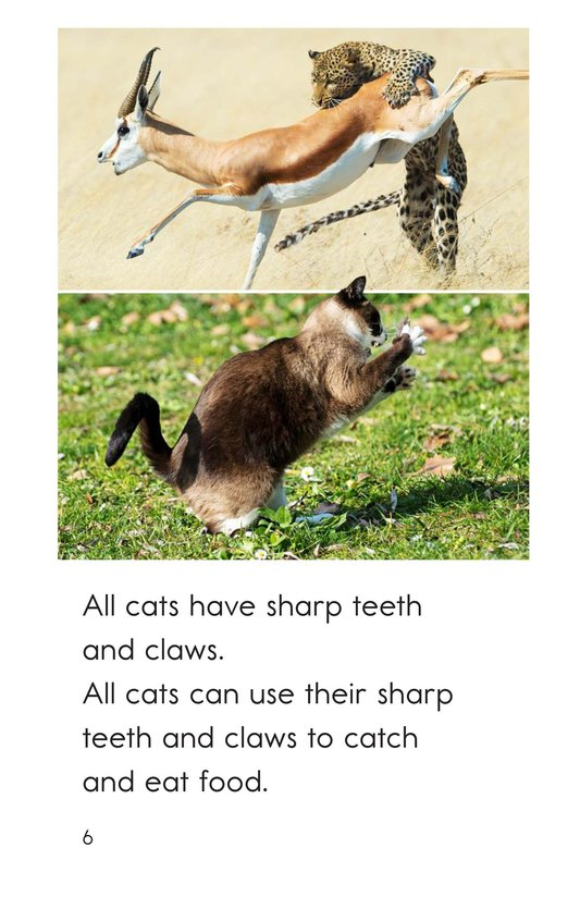 Book Preview For Big and Small Cats Page 6