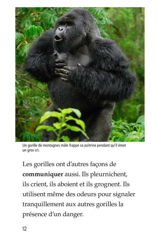 Book Preview For Gorillas Page 12