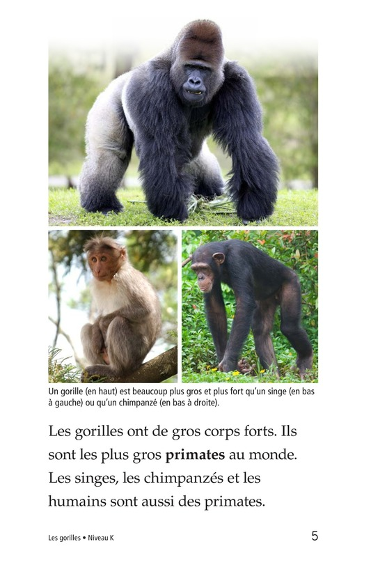 Book Preview For Gorillas Page 5