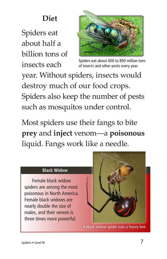 Book Preview For Spiders Page 7