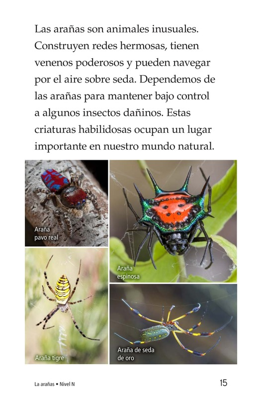 Book Preview For Spiders Page 15
