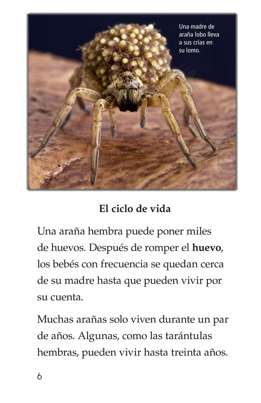 Book Preview For Spiders Page 6