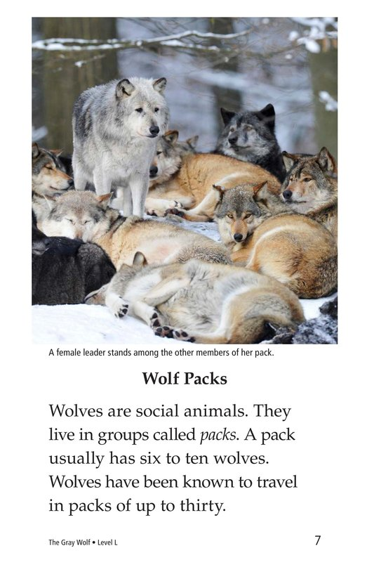Book Preview For The Gray Wolf Page 7