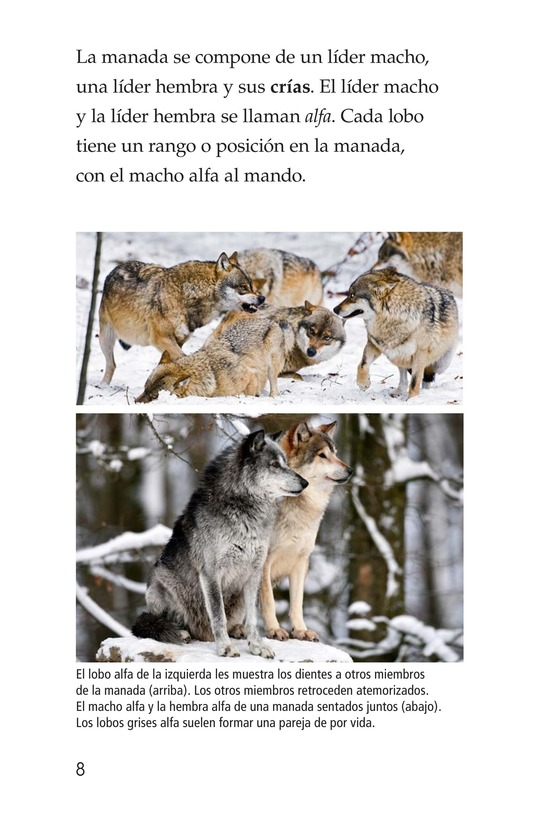 Book Preview For The Gray Wolf Page 8