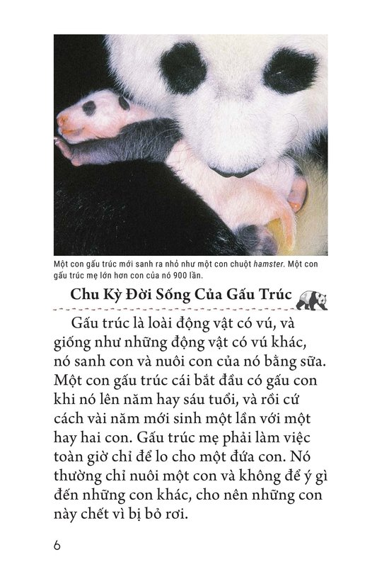 Book Preview For Giant Pandas Page 6