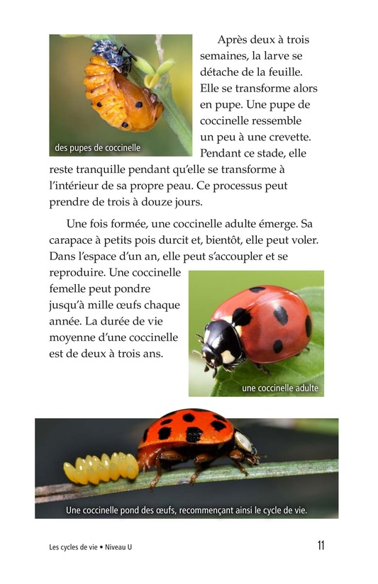 Book Preview For Life Cycles Page 11
