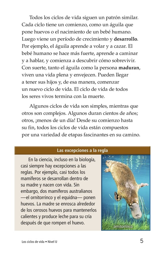Book Preview For Life Cycles Page 5