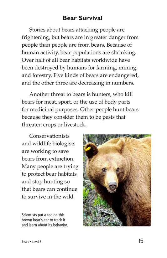 Book Preview For Bears Page 15